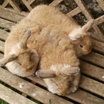 oatmill-rabbit